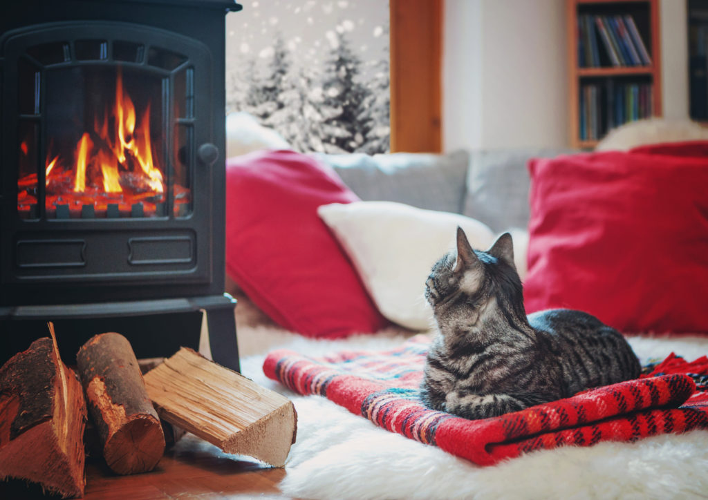 cat relaxing beside fireplace watching snowflakes outside the window/cat beside the fire 02