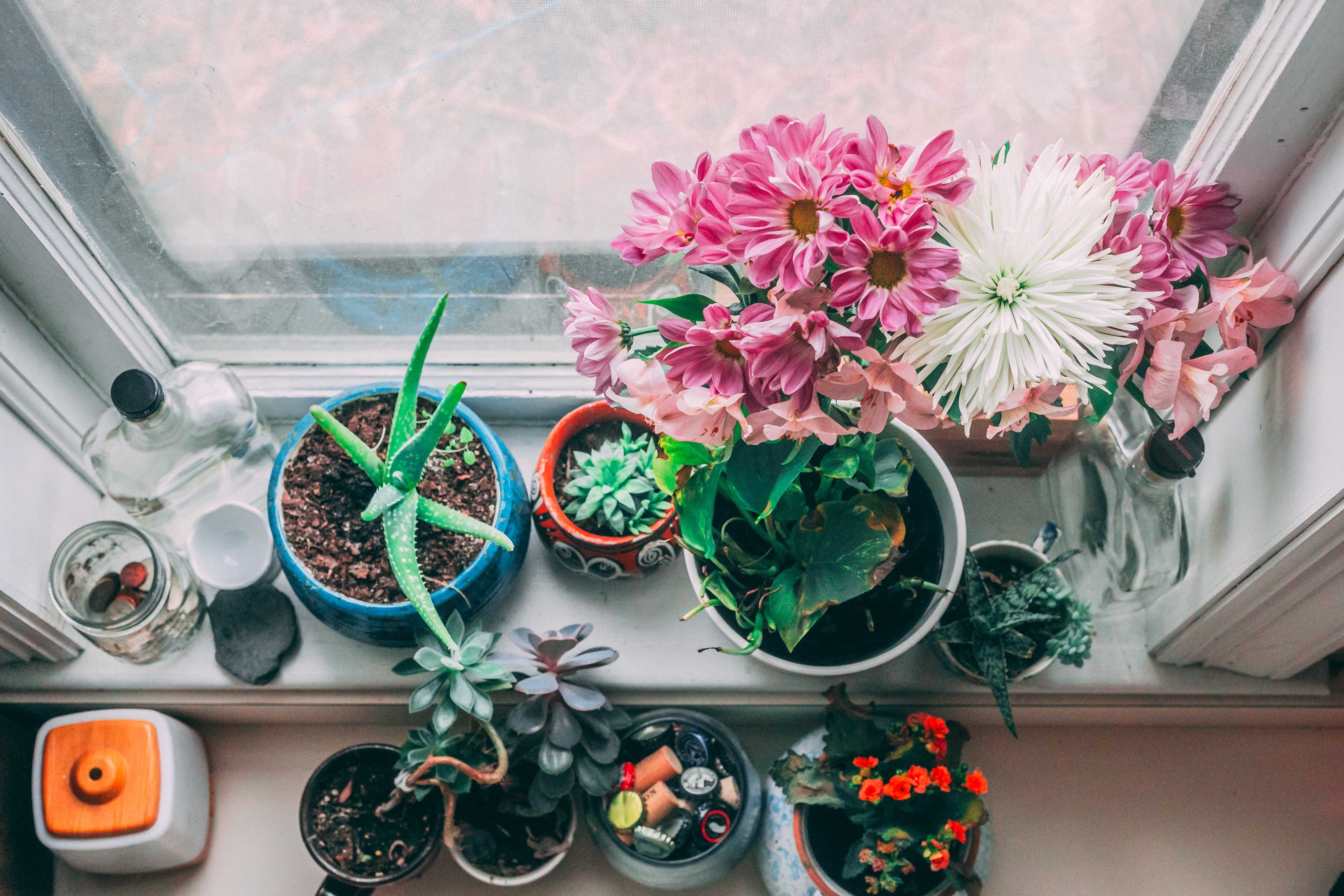 arrangement of house plants including flowers and cacti